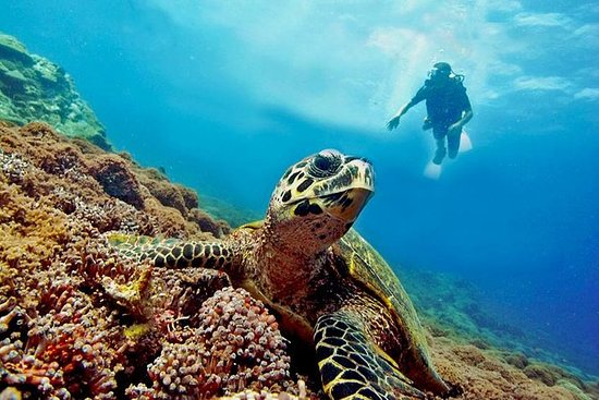 PADI Discover Scuba Diving at Gili Air