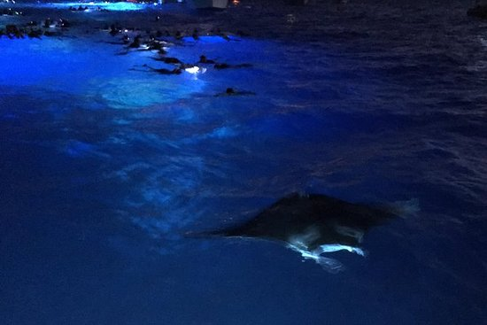 Garanteret Manta Ray Night Snorkel