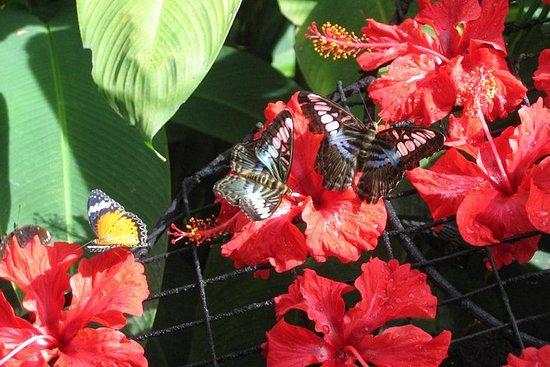 Halvdagstur til Tropical Spice Garden...