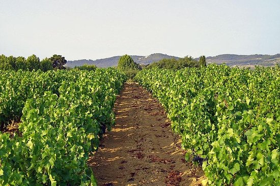 Tour Privativo de Vinhos da Provence...