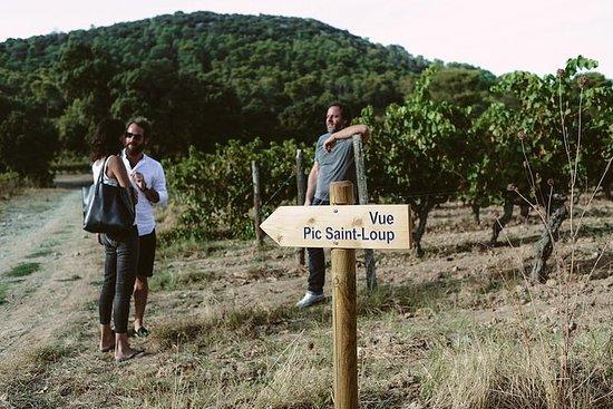 Vandring og vinsmaking i Pic St Loup