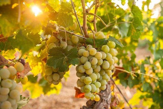 Cinque Terre Wine Tour i Manarola