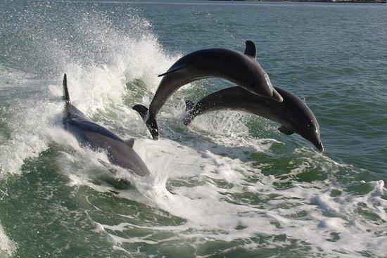St. Pete Beach Dolphin Racer Lancha...