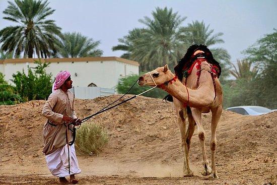 骆驼比赛观看
