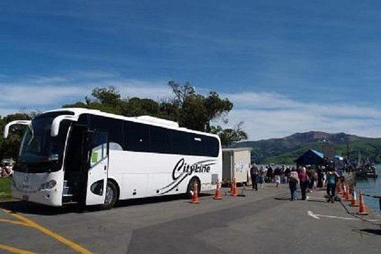 Full-Day Round-Trip Tour from Akaroa...