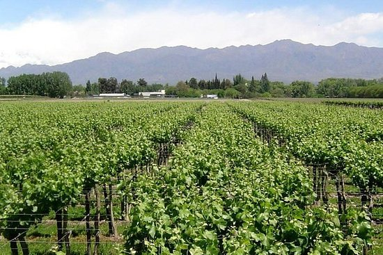 South Wine Route
