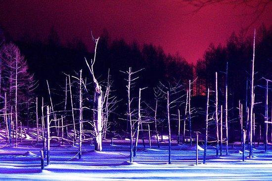 Winter Tour: Besuchen Sie Asahiyama...