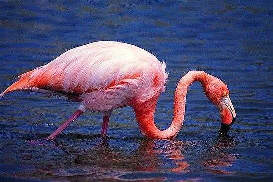 Passeio a Pé pelas Ilhas Pantanosas...