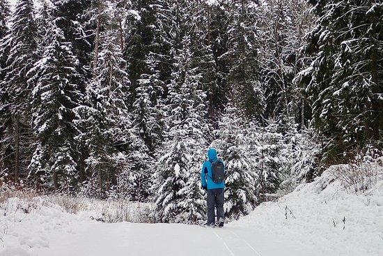 Excursión de un día al bosque de...