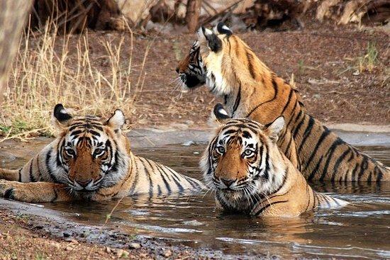 Ranthambore National Park 6 Timer...