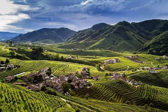 Wine tour & tasting in the land of...