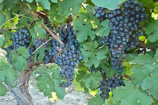Sensorische Weintour und Verkostung...