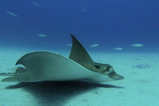 Plongée sous-marine à Tenerife avec...