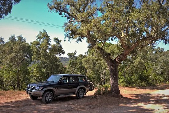 阿拉比达自然公园私人吉普车之旅