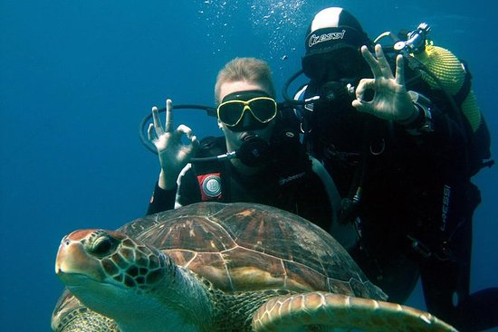 Try Scuba Diving in the South of...