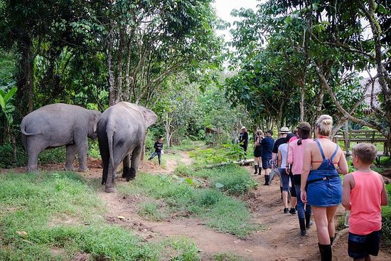 Jungle Sanctuary Tour fra Phuket