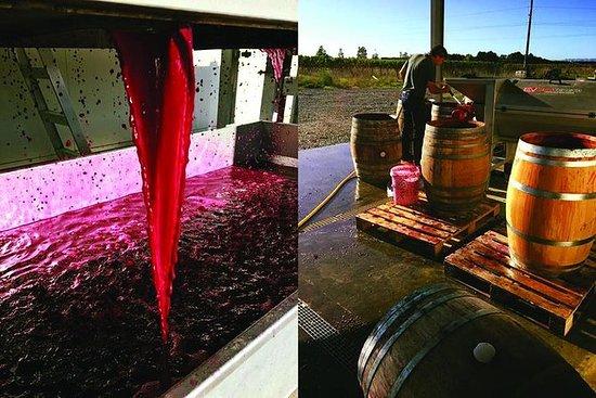 Winery Tour på Ash Ridge