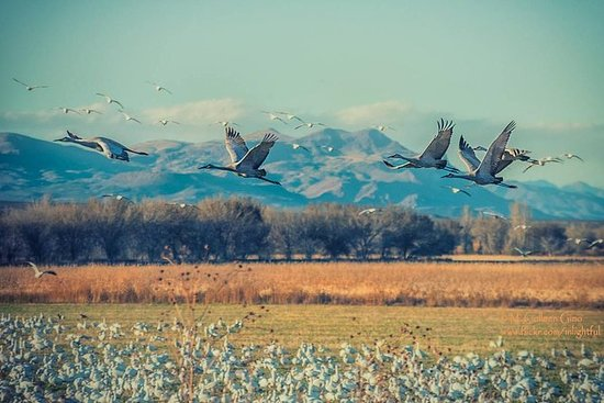 Bosque del Apache National Wildlife ...