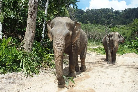 Elephant Jungle Sanctuary Tour da