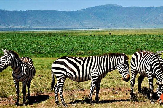 Safari in 3 giorni in Tanzania