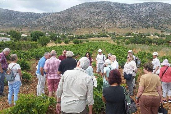 Atenas Wine Tour y almuerzo en una...
