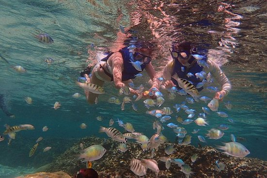 Guided Snorkeling Tour on a Tropical...