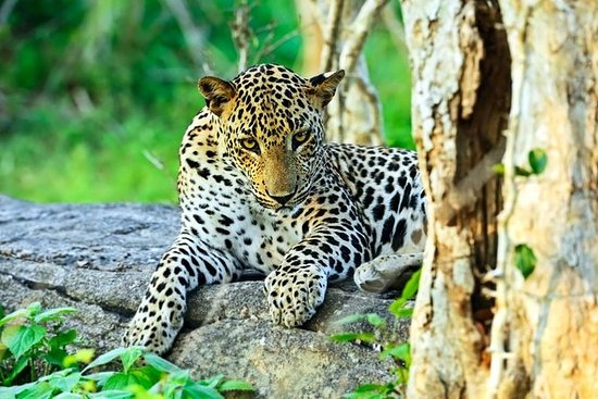 Private Day Tour: Yala National Park ...