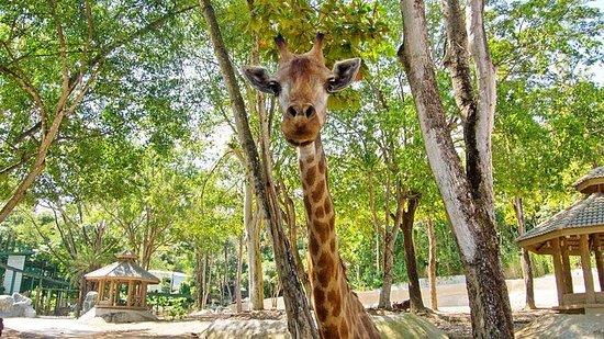 Entrada al zoológico de Chiang Mai...
