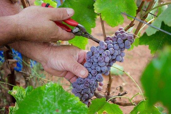 Mantinia: Cata de vinos con cueva y...