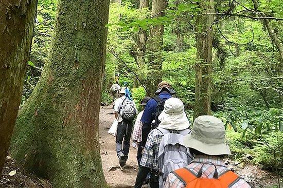 Privat tur - en fottur til Mt.Takao...