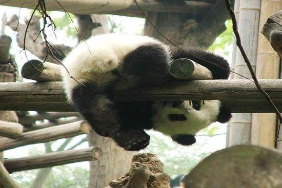 Giant Panda & Sichuan Cuisine Cooking...