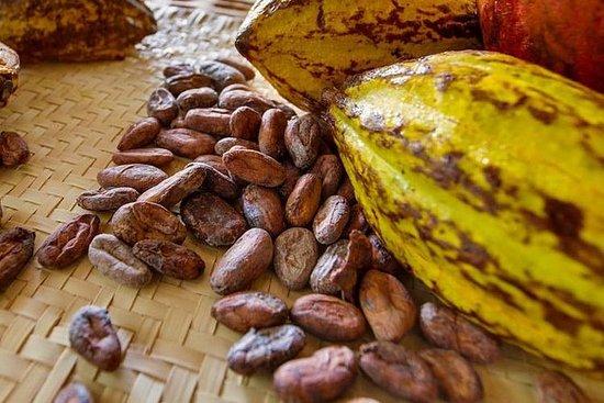 Maya-Schokoladenherstellung