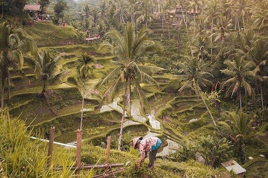 Ubud Adventures