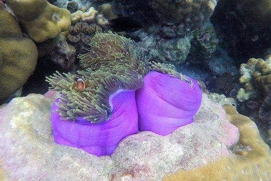 Eco Snorkeling Tour