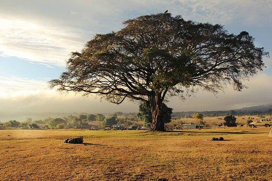 Circuit du Nord Safari en Tanzanie