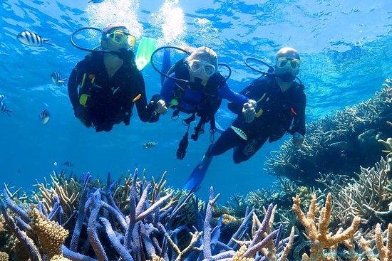 Scuba Diving Catalina island tour