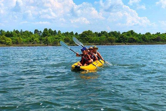 Kayak y observación de aves en el...
