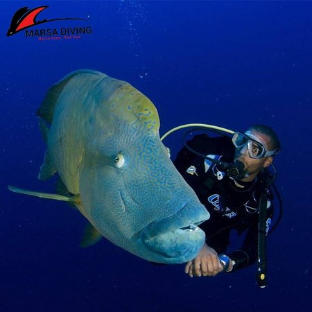 Marsa Diving Center (Marsa Alam) - 2019 All You Need to Know