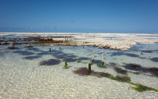 East Boothbay, ME: visit seaweed firming zanzinzibar east coast tour