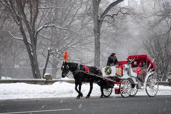 Central Park Horses