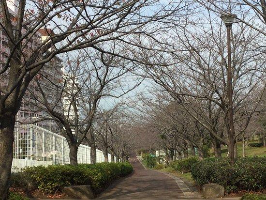 Komatsugawa Sembonzakura