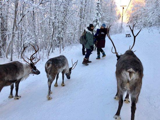 Running Reindeer Ranch