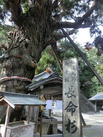 Gokuraku-ji Temple, Chomeisugi