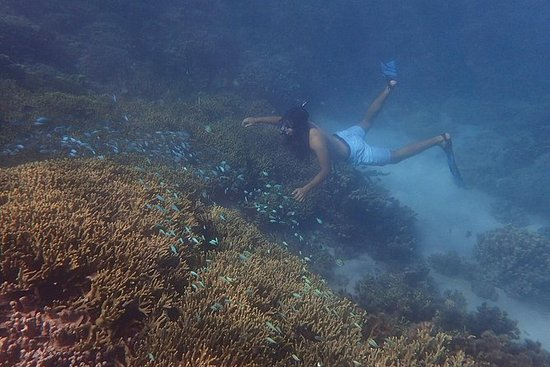 Private Introduction to Freediving