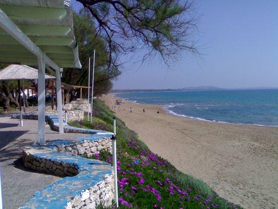 Amaliada, Greece: kourouta friendly beach