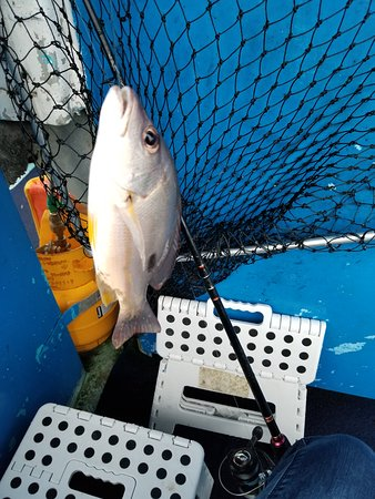 Great Day Fishing & Crabbing (Cairns): UPDATED 2019 All You