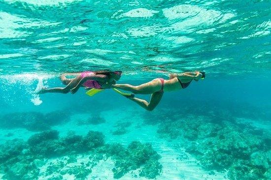 Aruba Lunch och Snorkel ...