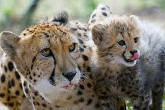 Ann Van Dyk Cheetah Centre Tour from...