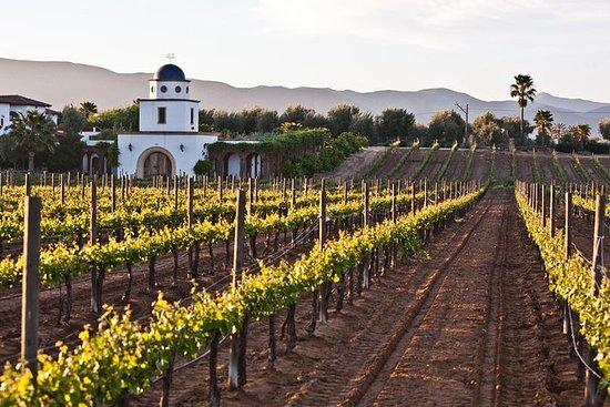 Baja Mexico Winery and Vineyard Tour