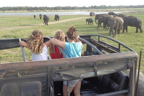 Kaudulla Park Private Jeep Safari van ...